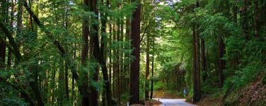 Photo of Highway 9 roadway and redwoods