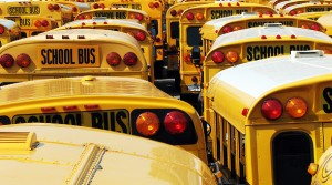 many school buses lined up in rows